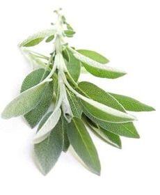 алтайфлора чай для похудения отзывы